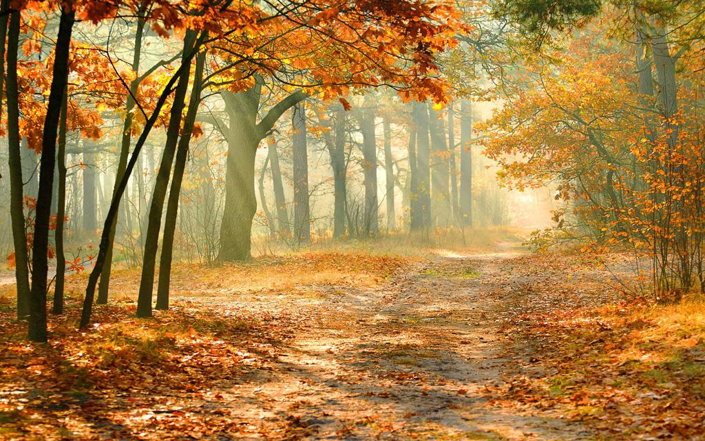 紅葉の林に優しい光の壁紙